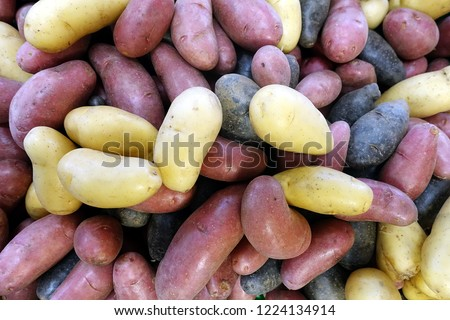 fingerling potatos stock photo © pixelsaway