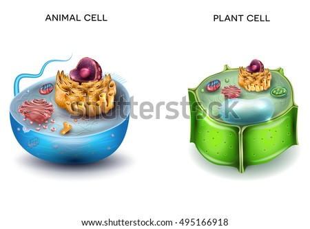plant cell structure cross section of the cell detailed colorfu stock photo © tefi