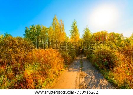 未舗装の道路 緑 森林 夏 日 ストックフォト © artjazz
