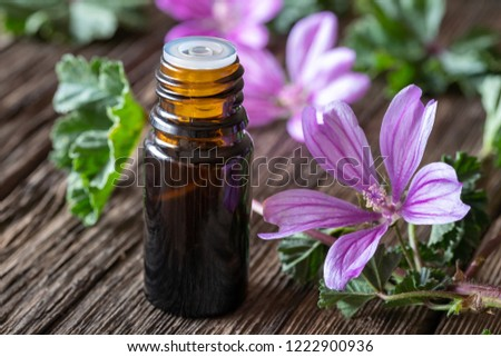 A bottle of mallow essential oil with fresh blooming malva sylvestris plant Stock photo © madeleine_steinbach