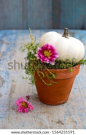 Witte baby pompoen keramische pot roze Stockfoto © laciatek