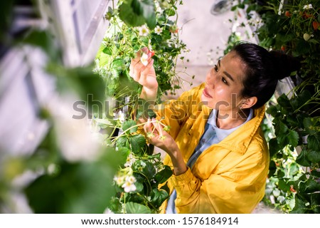 Asian greenhouse worker looking at strawberry while taking care of green crops Stock photo © pressmaster
