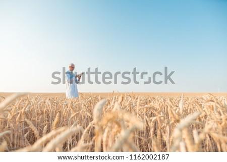 Hombre investigación grano campo de trigo agrícola científico Foto stock © Kzenon