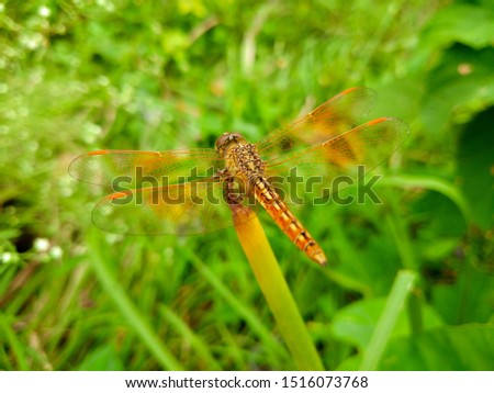 libélula · corpo · asas · grande · flores - foto stock © 3523studio