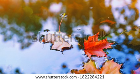 floating autumn leaf abstract reflection fall colors wenatchee r stock photo © billperry