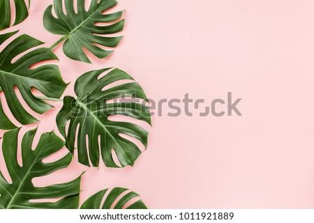 Tropicales diseno rosa hojas de palma plantas blanco Foto stock © BlueLela
