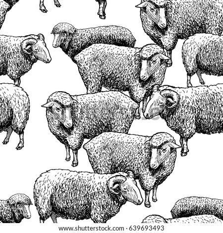 Sheep pattern. ewe ornament. Flock of sheeps. Farm animal backgr Stock photo © popaukropa