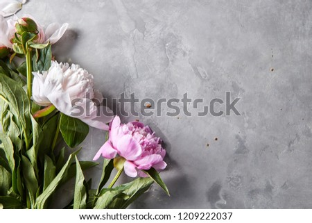 Corner frame of pink and white peonies on a gray concrete background with space for text. Natural la Stock photo © artjazz