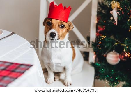 смешные Джек-Рассел терьер красный корона украшенный Сток-фото © vkstudio
