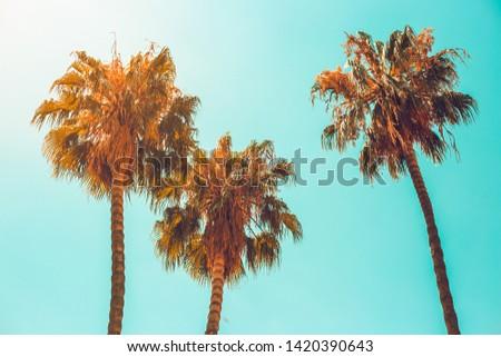 Palmiye ağaçları plaj yaz Barcelona doğa seyahat Stok fotoğraf © Anneleven