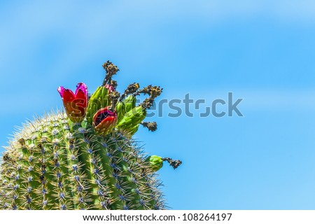Virágzó sivatag növény múzeum Arizona Stock fotó © meinzahn