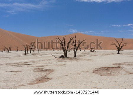 View over the deadvlei with the famous red dunes of Namib desert Stock photo © michaklootwijk