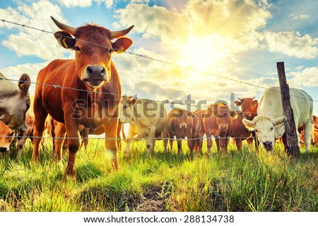tehenek · testtartás · tehén · festői · mező · felhők - stock fotó © goce