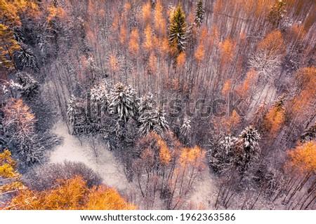 冬 · 妖精 · 雪 · 森林 · 松 · 木 - ストックフォト © tekso