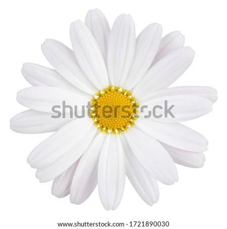 Belo flor isolado monocromático branco saudação Foto stock © frescomovie
