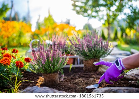 Sonbahar bahçıvanlık çim bahçe sonbahar boş Stok fotoğraf © IS2
