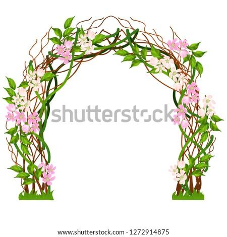 casamento · arco · decorado · flor-de-rosa · isolado · branco - foto stock © Lady-Luck