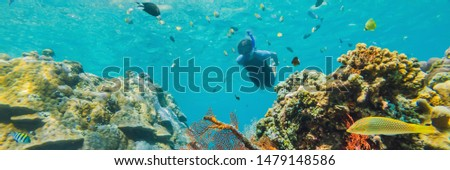 BANNER, LONG FORMAT Happy man in snorkeling mask dive underwater with tropical fishes with thailand  Stock photo © galitskaya