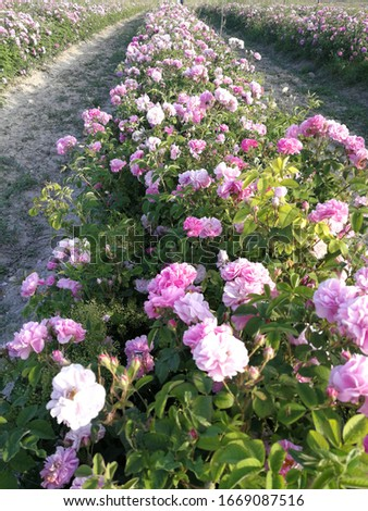 Jardin arbres augmenté fleurs nature photo Photo stock © ElenaBatkova