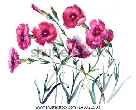 Rouge œillet fleur fleurir résumé floral Photo stock © Anneleven