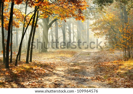 picturesque autumnal forest on a morning with the sunlight falling on rural lane stock photo © haiderazim