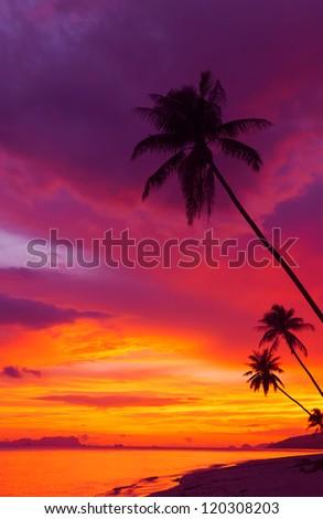Foto d'archivio: Cocco · sabbia · spiaggia · tropicale · verticale · panoramica · spiaggia