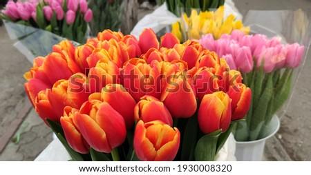 Piac tulipánok virág tavasz piros kosár Stock fotó © tannjuska