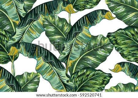 晴れた 熱帯 ヤシの葉 ストックフォト © Wetzkaz