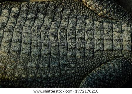 Vivo crocodilo real pele macro textura Foto stock © lunamarina