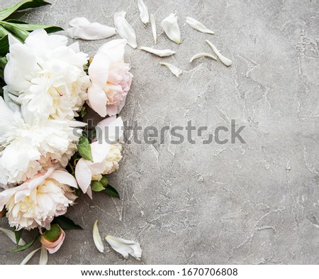 Petals and flowers of pink peonies on a gray concrete background with a black slate board and copy s Stock photo © artjazz