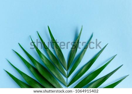 Photo stock: Naturelles · layout · vert · feuille · de · palmier · bleu · espace · de · copie