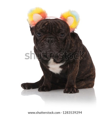 seated french bulldog wearing colorful ears headband looks to si Stock photo © feedough