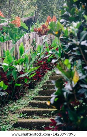 Alten Treppe Wasserfall Insel Indonesien Stock foto © boggy