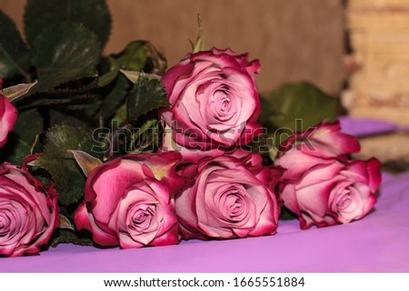 Luxury bouquet of purple roses, flowers in bloom as floral holid Stock photo © Anneleven