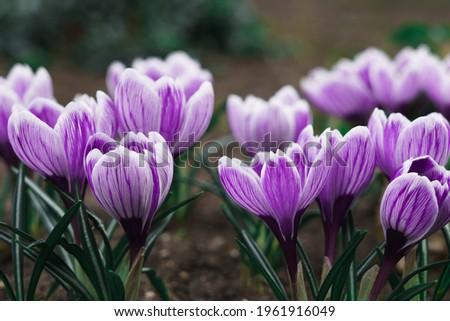 Colorido flores da primavera monte pequeno vaso flores Foto stock © BarbaraNeveu