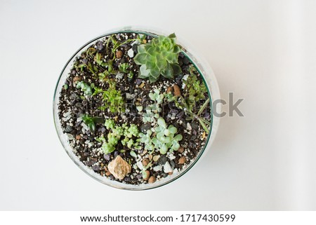 A beautiful composition of grey stones, a miniature potted tree bonsai and fresh spring flowers of d Stock photo © Lady-Luck
