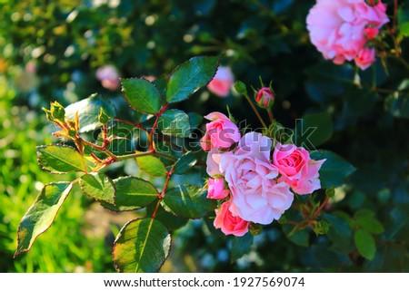 Gyönyörű fényes piros rózsaszín végtelen minta tavasz Stock fotó © evgeny89