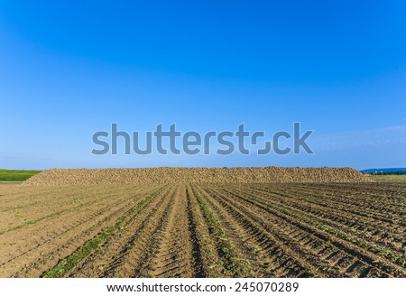 acres with indian corn in golden light and beautiful landscapeat Stock photo © meinzahn