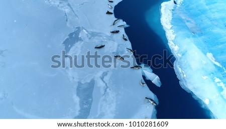 Légifelvétel madarak kilátás repülőgép hegyek sarkköri Stock fotó © meinzahn
