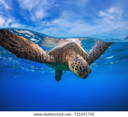Tenger teknős víz Karib tengerpart nap Stock fotó © xura
