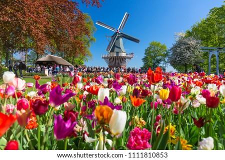 Tulpe Bereich Gärten Blumengarten Blume Landschaft Stock foto © master1305