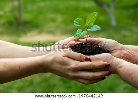 Dziewczyna drzewo jabłko przyjaciela owoców zabawy Zdjęcia stock © IS2