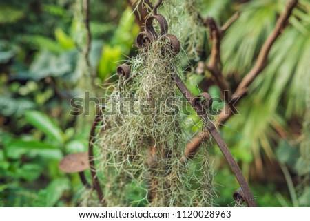 Levegő növény spanyol moha retró stílus üzlet Stock fotó © galitskaya