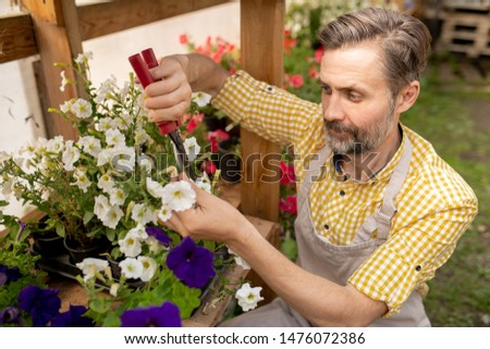 mature bearded male gardener in workwear pruning white petunias stock photo © pressmaster