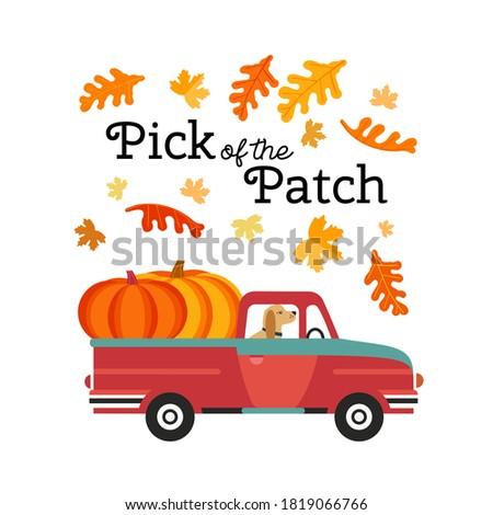 ван вектора урожай Осенний сезон баннер Сток-фото © frimufilms