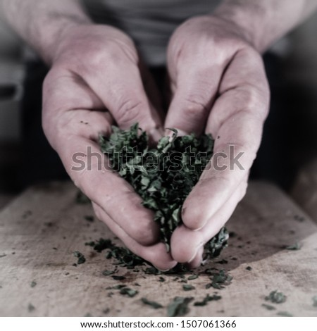 chef chopping herbs Stock photo © photography33
