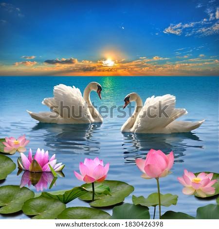湖 美しい 水 ユリ 自然 庭園 ストックフォト © meinzahn