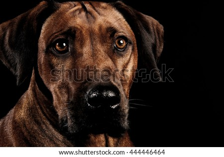Belo escuro foto estúdio olho retrato Foto stock © vauvau