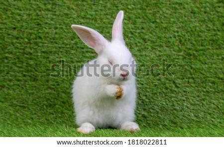küçük · tavşan · beyaz · tavşan · tavşanlar · Paskalya - stok fotoğraf © zurijeta