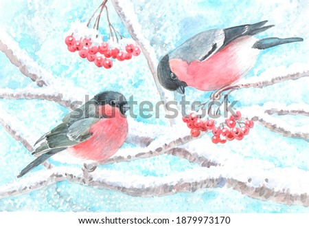 Winter sketch on the background of snowy red rowan branch with bullfinch. Sample of Christmas and Ne Stock photo © Lady-Luck